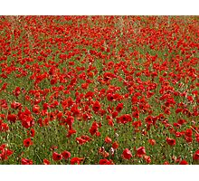 Field of Poppies Photographic Print