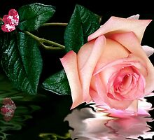 A Pink Hearts  Rose by Morag Bates