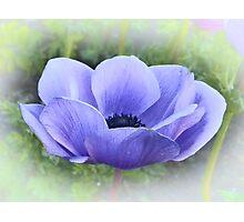 Purple Poppy Photographic Print