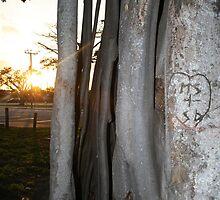 Sun Playing Peek-a-Boo by shoot2print