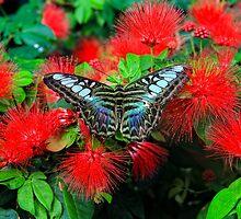Colored Butterfly by Gopuraj Soundrarajan