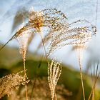Grasses 3 by maxblack