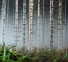 misty deep forest  by danguf