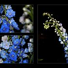 Duo + 1 Delphiniums by WalnutHill