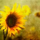 Sunflowers by lucyliu