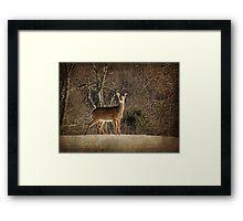 Be Kind to the Deer Framed Print