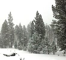 Snowstorm at Washoe Meadows State Park by Jared Manninen