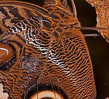 Owl Butterfly Macro by JMChown