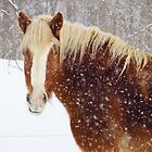 Winter Belgian Beauty by lorilee