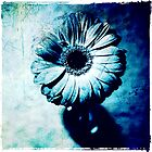 Gerbera - edition blue by Ronny Falkenstein