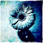 Gerbera - edition blue by Ronny Falkenstein