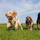 Dogs on the run by heidiannemorris