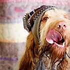 Woody ~ Italian Spinone in a hat by heidiannemorris