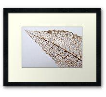 Skeletonised Leaf Detail Framed Print