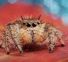 Arachnid Red Bokeh Blue by Dan Dexter