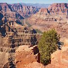Cliff Tree at Grand Canyon by David Lamb
