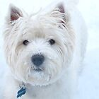 Westie speke by MarianBendeth