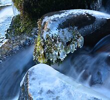 Middle McCloud Falls V by Tracy Jones