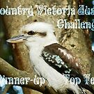 *Kookaburra Top Ten Banner* Hall's Gap Vic.  by EdsMum