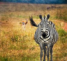 White Stripes  by Sanya  Sundar