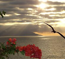 sunset with bougainvilleas and frigate bird - puesta del sol con buganvilla y fragata by Bernhard Matejka