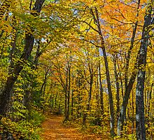 Autumn North Wood by Kenneth Keifer