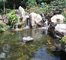 Koi Fish Pond by nutty1kel