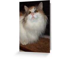 Little Missy Greeting Card