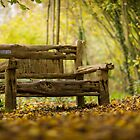 Bench by Kevin  Poulton