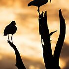 Sunset Silhouette by PeaceInArt