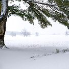 Pine Tree Framing Snow Scene by KellyHeaton