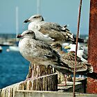 Seagull Aristocracy by Martha Sherman