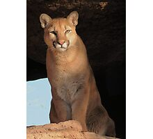 Mountain Lion Cub ~ Cruz Photographic Print