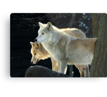 Two young wolves  Metal Print
