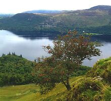 Hawthorn above Derwent Water by GeorgeOne