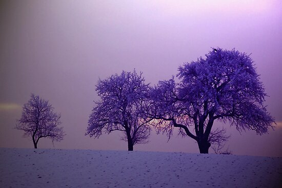 Just three trees by Arie Koene