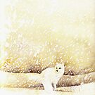 Arctic Fox in the Snow by Ray Shuell