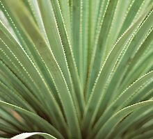 Agave by Bethany Helzer