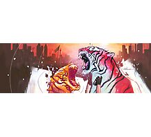 Dueling Tigers Wide Edition Photographic Print