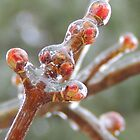 Maple Tree Buds Enshrouded in Ice by TrendleEllwood