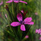 Comforting Wildflowers by PineSinger