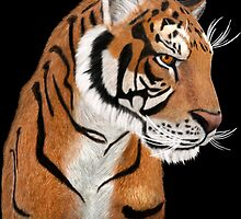 Tiger Portrait by Walter Colvin