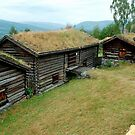 Grass on the roof by Arie Koene