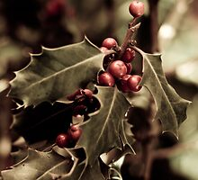 Holly bush with red berries III by VanGalt