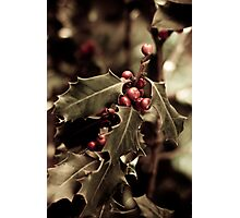 Holly bush with red berries III Photographic Print