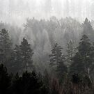 6.2.2014: Forest and Fog I by Petri Volanen
