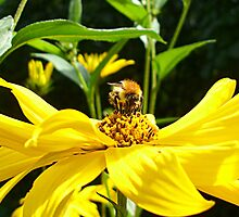 A BEE AND HIS FLOWER FRIEND by Heidi Mooney-Hill