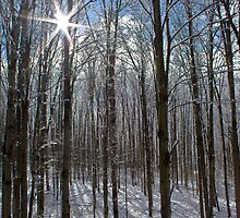 Shinning Through the Snow Covered Branches by chelseysue