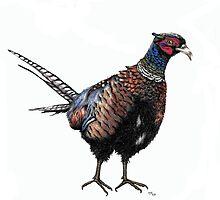 Pheasant by KarenJI1962