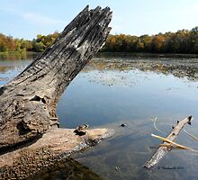 Frog on log relaxing landscape by Barberelli